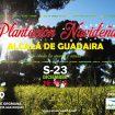 Cartel plantación árboles sábado 23 diciembre.