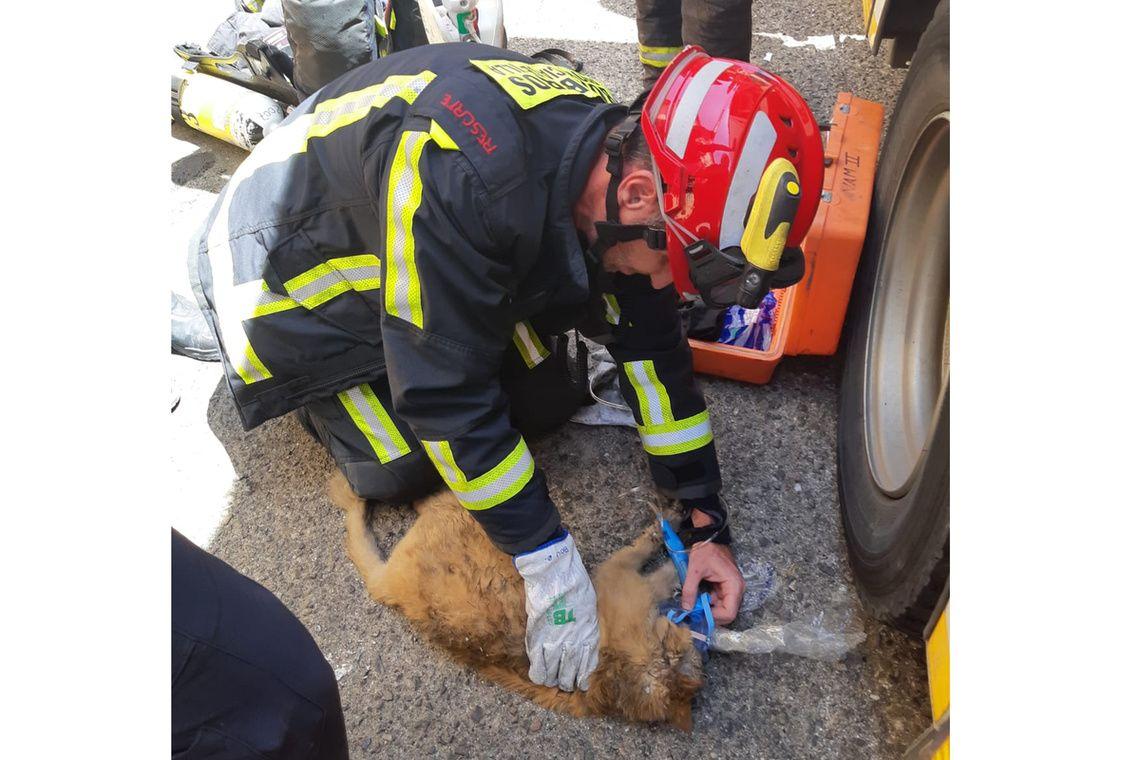 una-impecable-actuacion-de-los-bomberos-en-la-extincion-del-incendio-en-una-vivienda