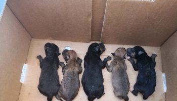 Rescate de cachorritos