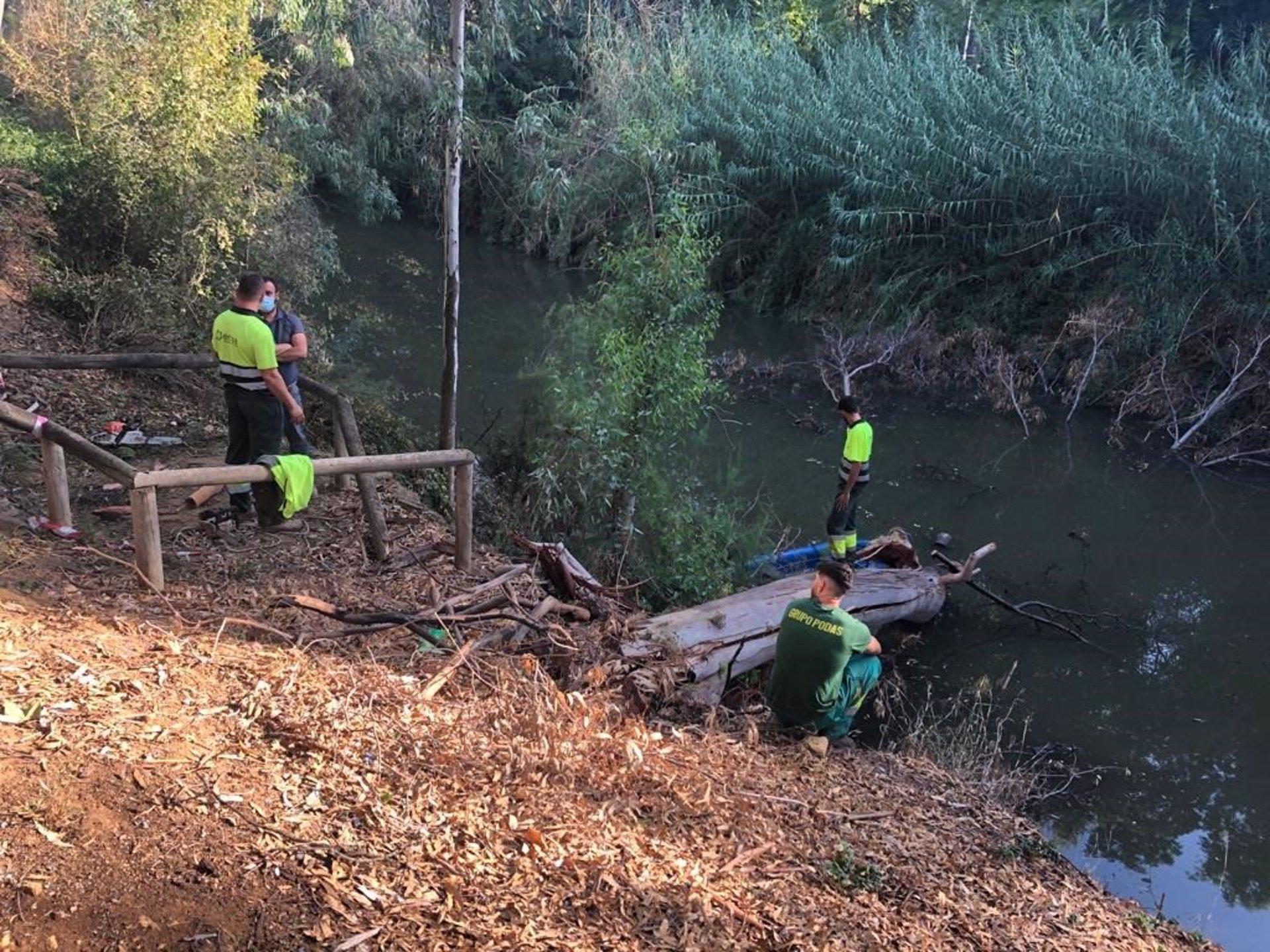 Sevilla.- Retirados los árboles caídos sobre el Guadaíra y ejemplares enfermos que se sustituirán por otros autóctonos