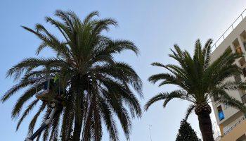 Sevilla.- Ayuntamiento de Alcalá de Guadaíra inicia la poda y tratamiento de plagas en más de 200 palmeras del municipio