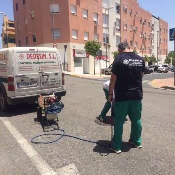 Sevilla.- Ayuntamiento Alcalá Guadaíra ha realizado en este 2021 más de 230 actuaciones desinsectación y desratización