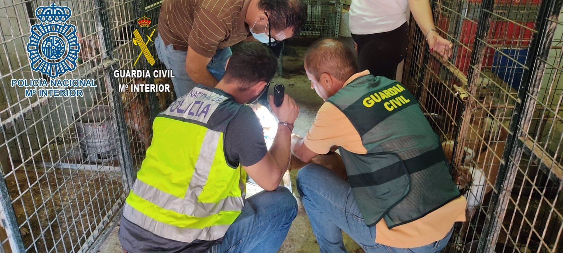 Sevilla.-Sucesos.-Localizan 37 perros enjaulados y en condiciones de abandono tras ser robados en el Aljarafe